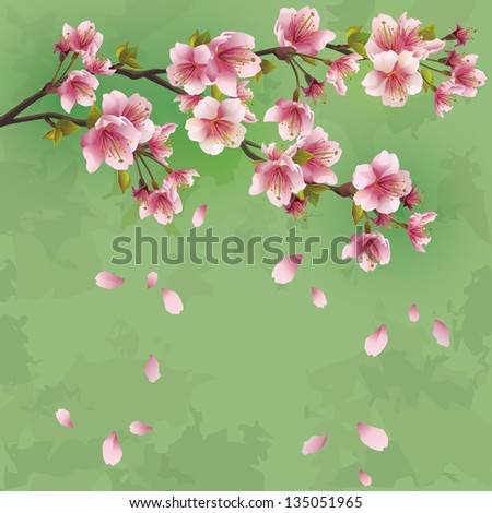 Grunge Japanese background green with sakura blossom - Japanese cherry tree. Greeting or invitation card. Raster version - stock photo