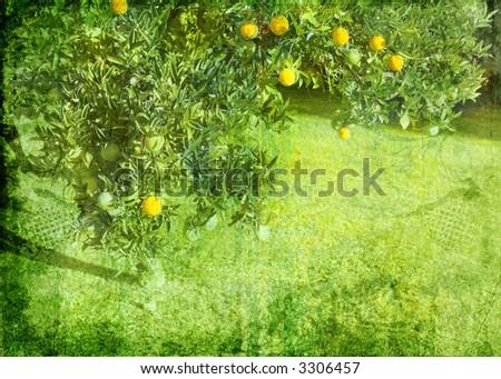 Grunge lemon tree background on paper texture burnt order - stock photo