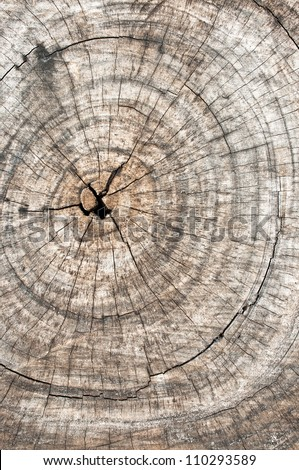 Grunge of texture wood materials background - stock photo