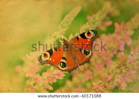 Grunge retro butterfly greeting card with vintage effect - stock photo