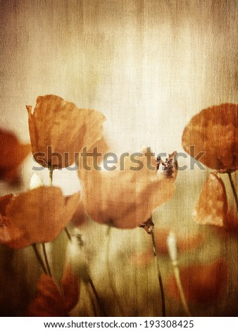 Grunge style photo of poppy flower field, abstract natural background, beautiful textured wallpaper, beauty of nature concept - stock photo