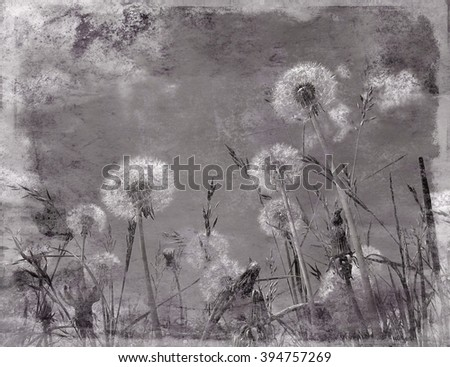 Grunge texture effect applied to dandelion flowers