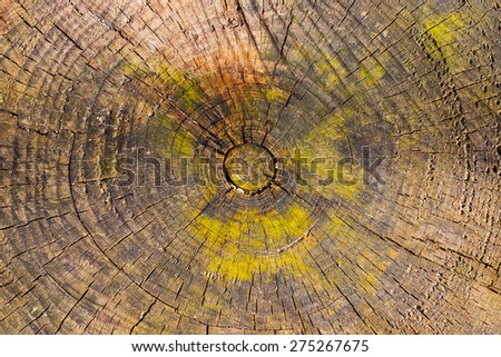 Grunge texture of the old oak stump - stock photo