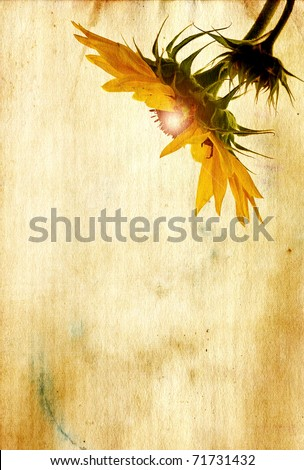 Grunge textured sunflower head with glowing center on antique paper background with copy space. - stock photo