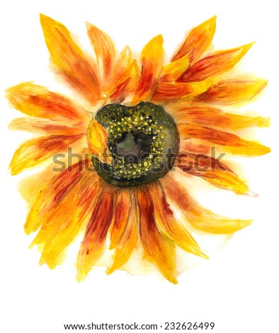 Grunge watercolor image of flower of sunflower on white background - stock photo