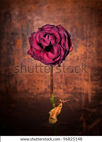 Grunge wilted rose over old leather background - stock photo