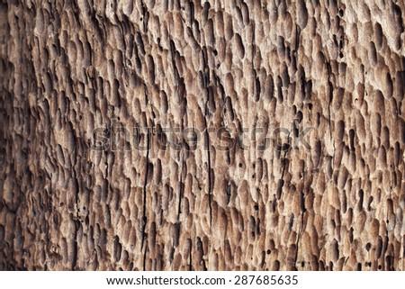 grunge wooden texture - stock photo