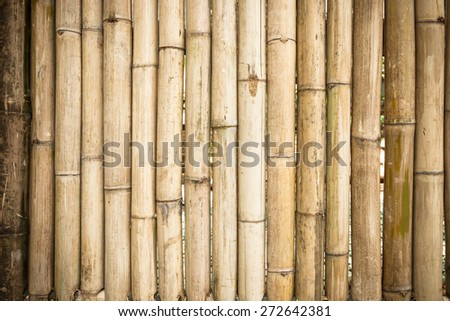 grunge yellow bamboo background and texture . - stock photo