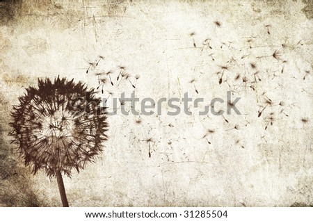 Grungy background with a blowing dandelion