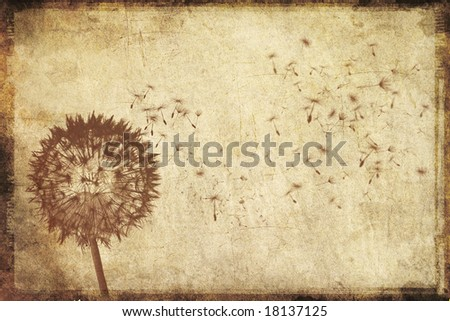 Grungy background with dandelion blowing in the wind
