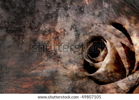 Grungy dark rose blooming on a vintage background