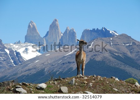 Guanaco in the face of the mountains, Torres del Paine park, Chile, Patagonia - stock photo