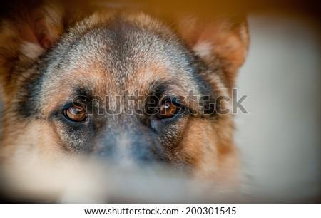 guard eyes - stock photo