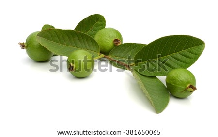 Guavas with leaves