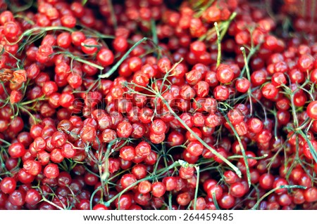 guelder rose berries - stock photo