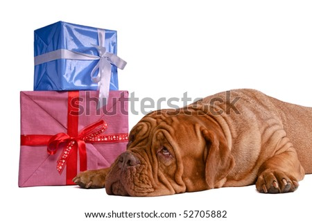 Guessing whats inside those present boxes - hopefully something tasty ! - stock photo
