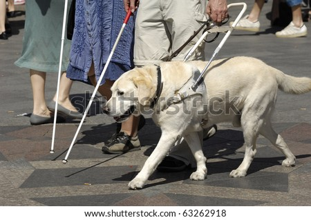 Guide dog is helping bilnd people - stock photo
