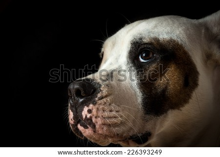 Guilty dog on a black background