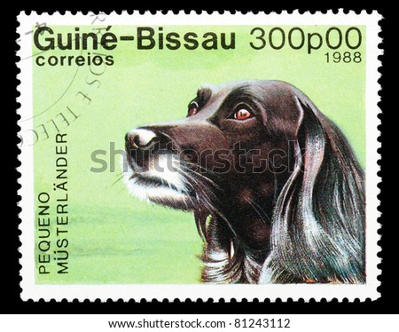 GUINEA-BISSAU - CIRCA 1988: A stamp printed in the Republic of Guinea-Bissau shows Pequeno Musterlander dog, circa 1988 - stock photo
