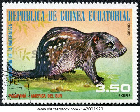 GUINEA - CIRCA 1976: A stamp printed by GUINEA shows ferret, series animals, circa 1976 - stock photo