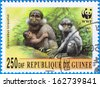 GUINEA - CIRCA 2000: A stamp printed in Guinea shows Cercocebus torquatus, series, circa 2000 - stock photo