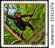 "GUINEA - CIRCA 1975: A Stamp shows image of a chimpanzee with the inscription ""Pan Troglodytes"", series, circa 1975 - stock photo"