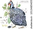 guinea fowl bird watercolor...