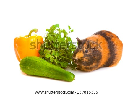 guinea pig about vegetables on a white background, isolated - stock photo