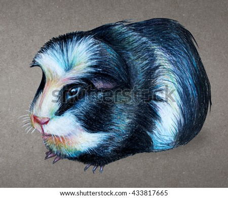 Guinea pig drawing. Vintage background - stock photo