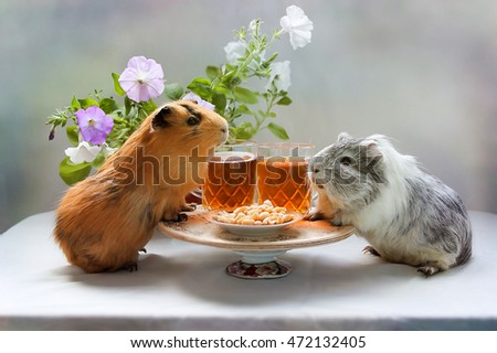 Guinea pig lunch