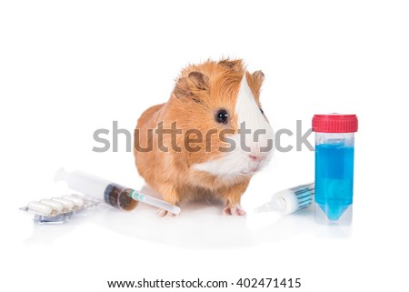 Guinea pig with a medicines isolated on white