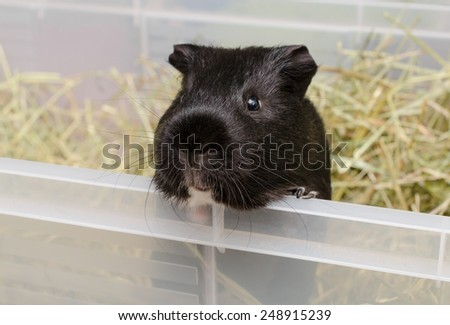 guinea playground - stock photo