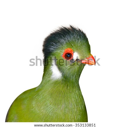 Guinea Turaco also known as Green Turaco (Tauraco persa) isolated on white background, selective focus. - stock photo