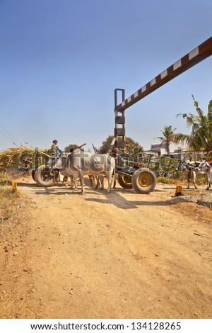GUJARAT, INDIA - MARCH 1: Bullock carts local infrastructure risk danger causing congestion on approach to unmanned rail crossing passing at hinterland village on March 1, 2013 in Gujarat, india