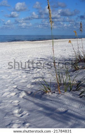 Gulf of Mexico and seaoats in Madeira Beach Florida. - stock photo