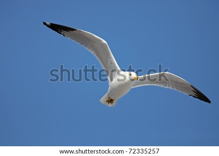 Gull - stock photo