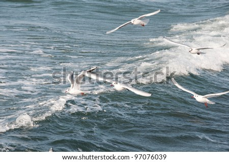 Gull against the waves - stock photo