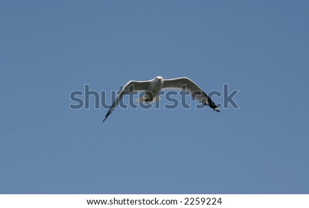 Gull flying in blue sky
