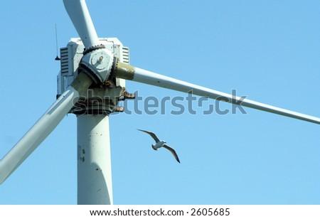 Gull gliding near rusting coastal wind turbines - stock photo