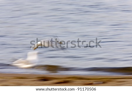 Gull in flight - stock photo