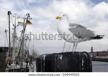 gull in the harbor of Cuxhaven, Germany - stock photo
