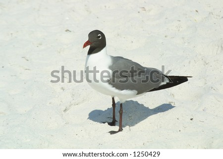 Gull standing on sand