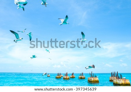 Gulls circling over the sea in search of food on a background of sea and blue sky. Sea birds in flight in search of feed - stock photo