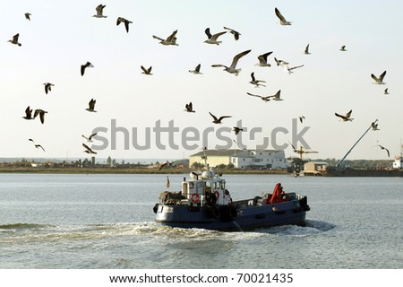 gulls flying in a port - stock photo