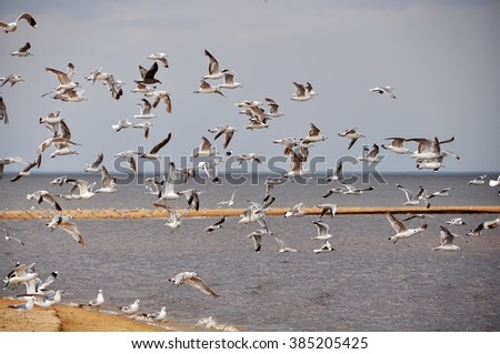 Gulls in the sky, beach, Baltic Sea