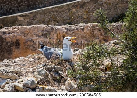Gulls nest. - stock photo