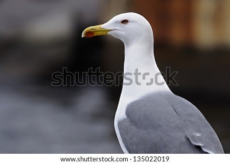 Gulls (often informally called seagulls) are birds in the family Laridae. They are most closely related to the terns and only distantly related to auks, skimmers, and more distantly to the waders.