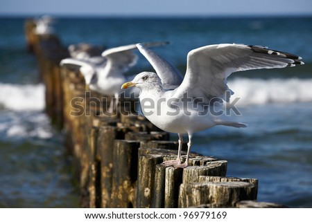 Gulls on groynes in the surf on the German Baltic coast - stock photo