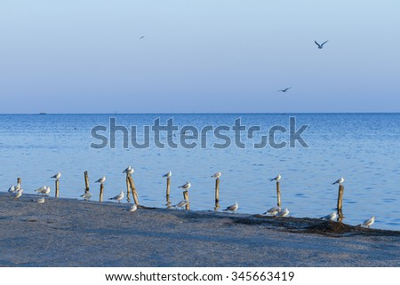 Gulls on the shore of the blue sea evening.