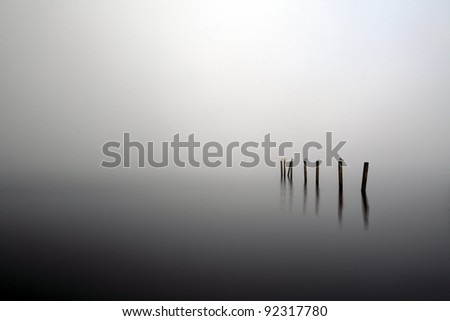 Gulls perched on wooden fence posts rising out of a mist covered Loch Lomond. - stock photo